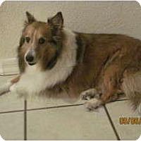 Adopt A Pet :: Lady - apache junction, AZ