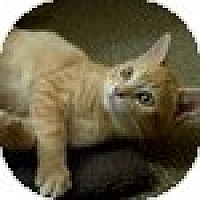 Adopt A Pet :: Valencia - Vancouver, BC