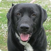 Adopt A Pet :: Morgan - Salem, NH