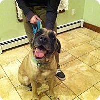 Adopt A Pet :: Miss Maxie - Durham, NH