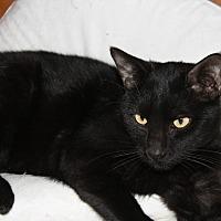 Adopt A Pet :: Sawyer - Rawlins, WY