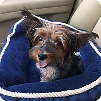 Adopt A Pet :: mollie - Bakersfield, CA