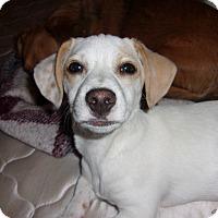 Adopt A Pet :: Wrigley - Arenas Valley, NM