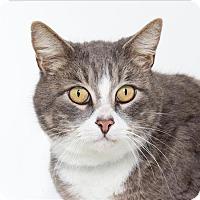 Adopt A Pet :: Wilbur - Atascadero, CA