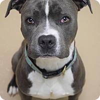 Adopt A Pet :: Monty - Dublin, CA