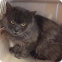 Adopt A Pet :: Newman - Merrifield, VA