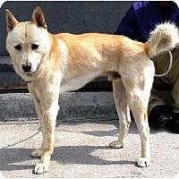 Adopt A Pet :: Packgoo - West New York, NJ