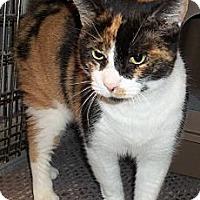 Adopt A Pet :: Patches - Acme, PA
