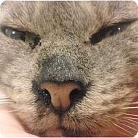 Adopt A Pet :: Stubby - Lakeland, FL