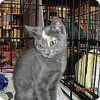 Adopt A Pet :: Jill - Riverside, RI