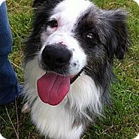 Adopt A Pet :: SMOKE - ROCKMART, GA