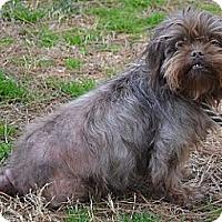 Adopt A Pet :: Coco - Athens, GA