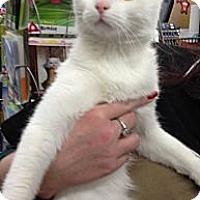 Adopt A Pet :: Sugar - Troy, OH