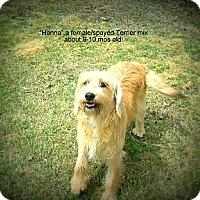 Adopt A Pet :: Hanna - Gadsden, AL