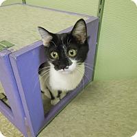 Adopt A Pet :: Ellie - Medina, OH