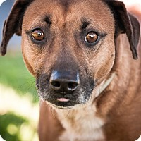 Adopt A Pet :: Tommy - Gainesville, FL