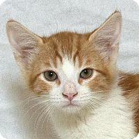 Adopt A Pet :: Archie M - Sacramento, CA