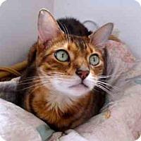 Adopt A Pet :: Eli - Davis, CA