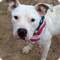 Adopt A Pet :: Twitty - Sylacauga, AL