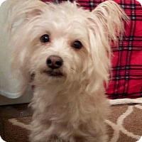 Adopt A Pet :: Poncho - Billings, MT