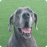 Adopt A Pet :: Hera - Lakewood, CO