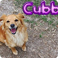 Spaniel (Unknown Type) Mix Dog for adoption in Nixa, Missouri - Cubbie #980