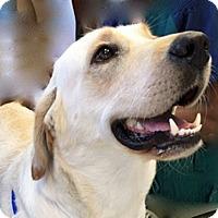 Adopt A Pet :: Sassy II - BIRMINGHAM, AL