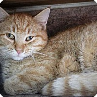 Adopt A Pet :: Tommy - West Des Moines, IA
