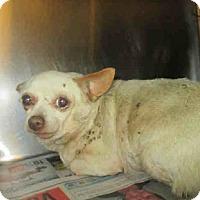 Adopt A Pet :: A1353710 is at San Jacinto - Beverly Hills, CA