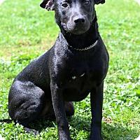 Adopt A Pet :: Tater Tot - Waldorf, MD