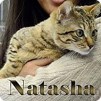 Adopt A Pet :: Natasha - Pittstown, NJ