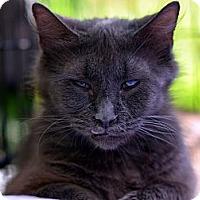 Adopt A Pet :: Stella - Brooklyn, NY