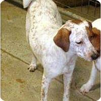 Adopt A Pet :: Puppy 1 - Irvington, KY