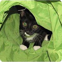 Adopt A Pet :: CHARLOTTE-COURTESY POST - Fairfax, VA