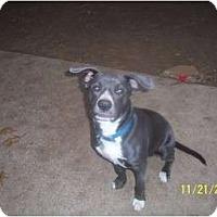Adopt A Pet :: Rylee - DFW, TX
