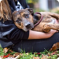 Adopt A Pet :: Queenie - Reisterstown, MD