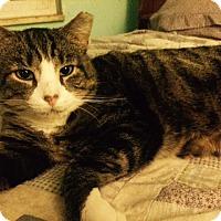 Adopt A Pet :: Carlos - Delmont, PA