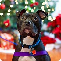 Adopt A Pet :: Tru - Troy, MI