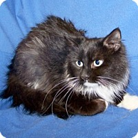 Adopt A Pet :: Star - Colorado Springs, CO