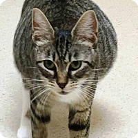 Adopt A Pet :: Betsy - Vancouver, WA