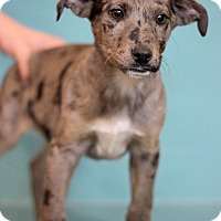 Adopt A Pet :: Cologne - Waldorf, MD