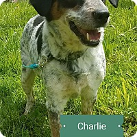 Adopt A Pet :: Charlie - Cincinnati, OH