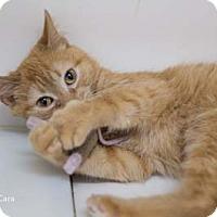 Adopt A Pet :: Cara - Merrifield, VA