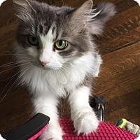 Adopt A Pet :: Lorraine - Little Rock, AR