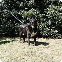 Adopt A Pet :: Brandy - Winnsboro, SC