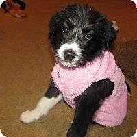 Adopt A Pet :: Ruby - Essex Junction, VT
