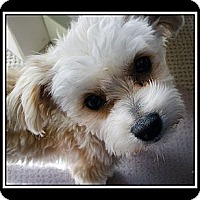 Adopt A Pet :: Mattyson - Fort Braff, CA