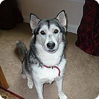 Adopt A Pet :: Sacha - Orange Park, FL