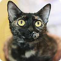 Adopt A Pet :: Irina - Canoga Park, CA