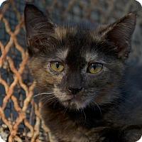 Adopt A Pet :: Chickpea - Brooklyn, NY